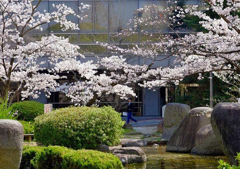 OU-Toyonaka-Library_Spring