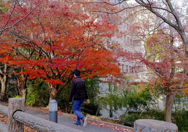 OU-Toyonaka-campus-red-leaves