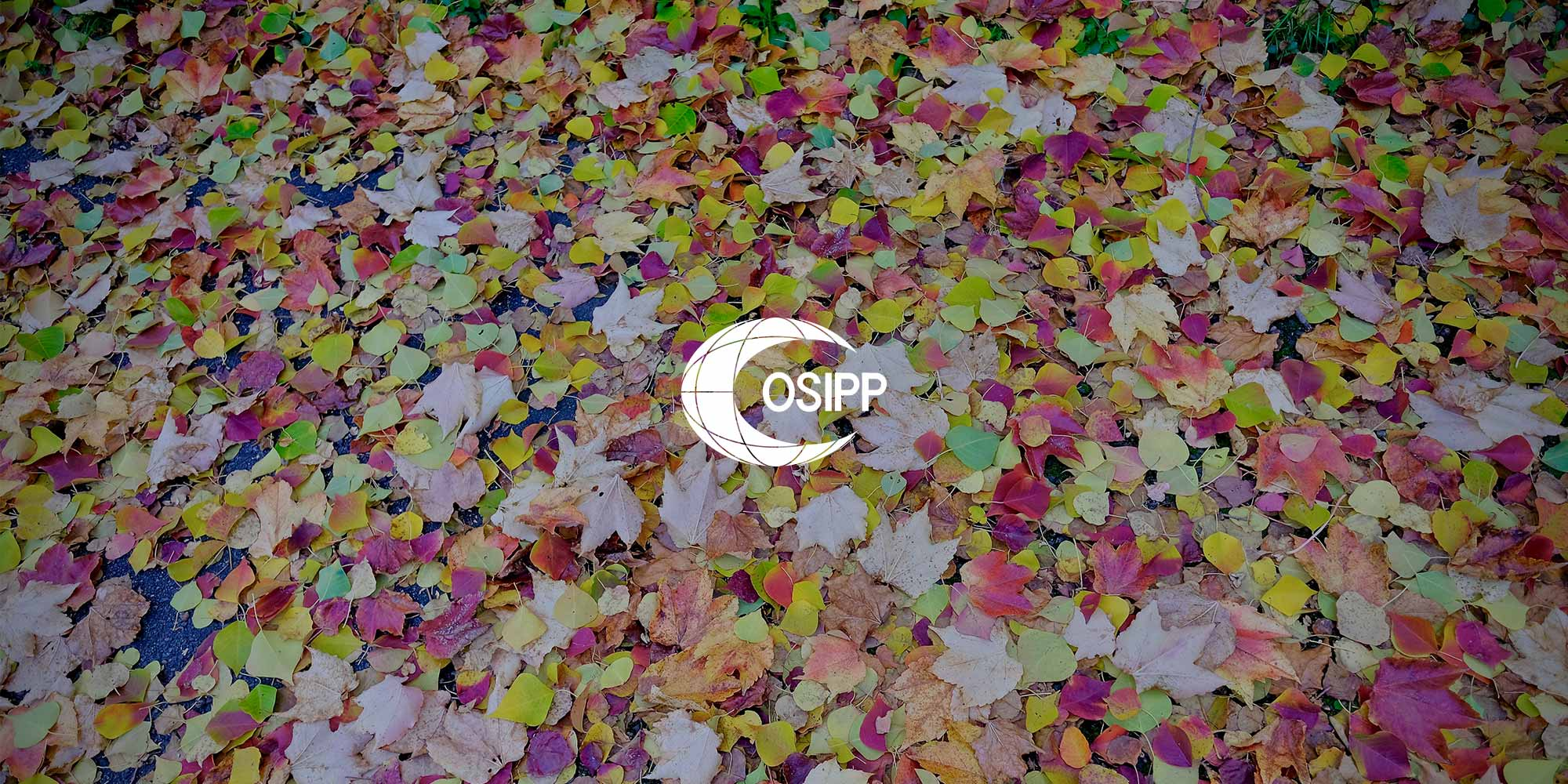 OSIPP leaves logo