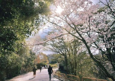 Ishibashi Entrance in spring, Toyonaka Campus