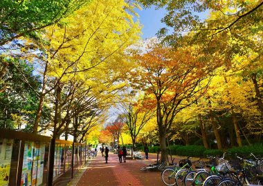 Autumn on General Education Main Street, Toyonaka Campus
