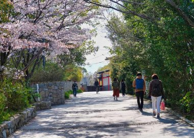 Springtime on the Handai Slope, Toyonaka Campus